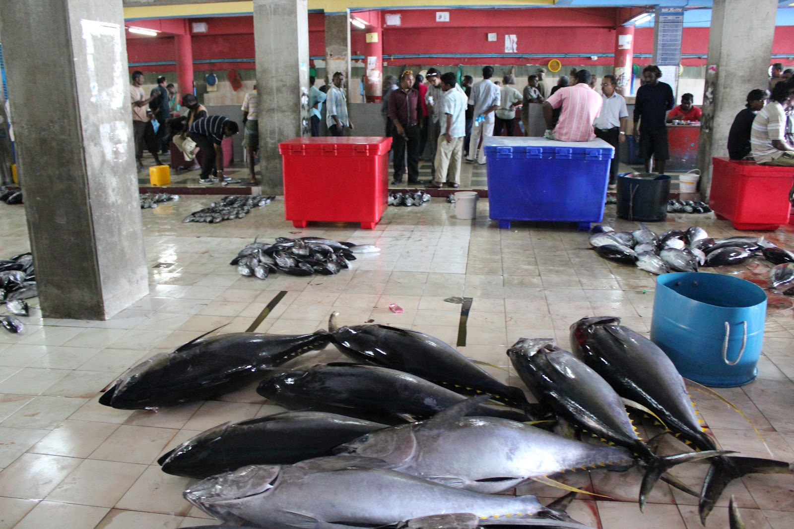 Maldives fish market