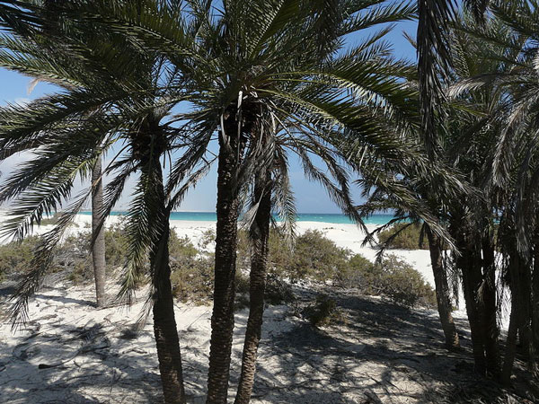 Socotra-and-a-perfect-beach