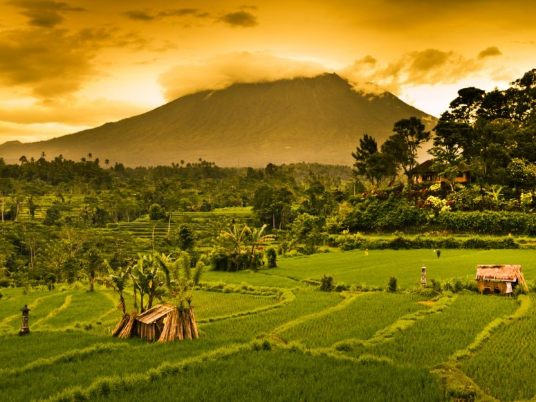 bali-indonesia-mount-agung-rice-fields