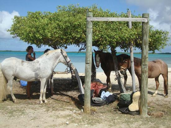 bonaire  horses and donkeys