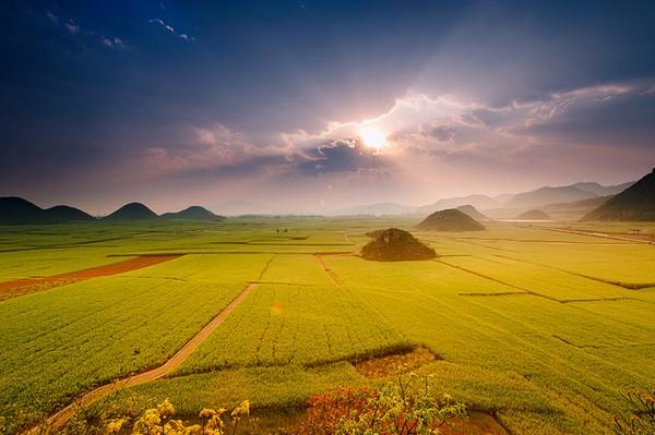 Canola Flower Fields China (1)