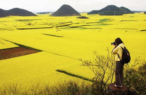 Canola Flower Fields China (6)