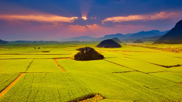 Canola Flower Fields China (7)