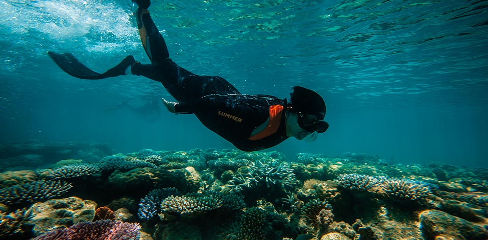 Snorkeling Tubbataha: The Most Beautiful Reef in the Philippines