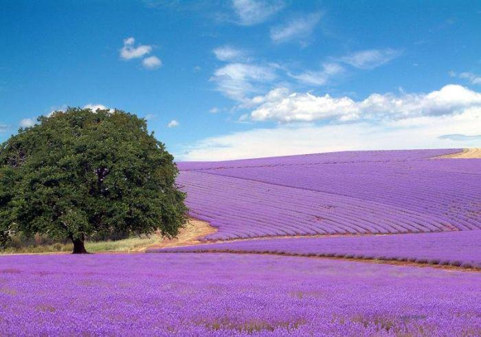 Provence (4)