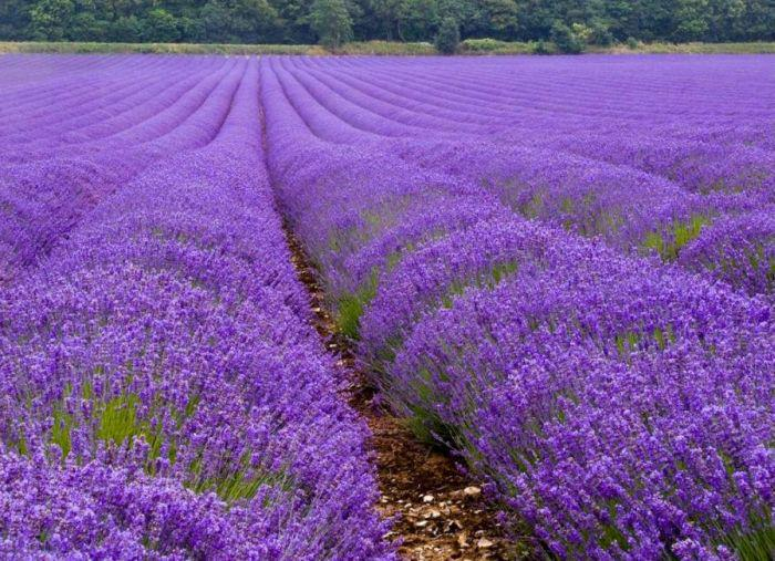 Provence (5)