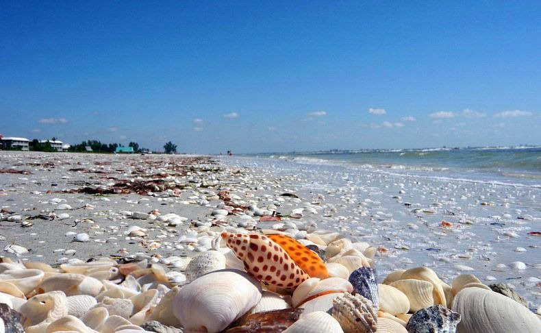 sanibel-shell4
