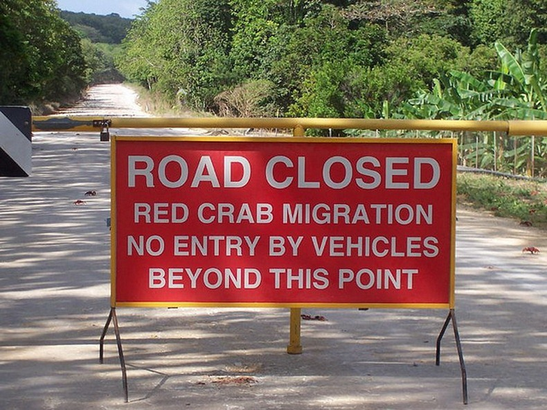 red-crab-migration-6[2]