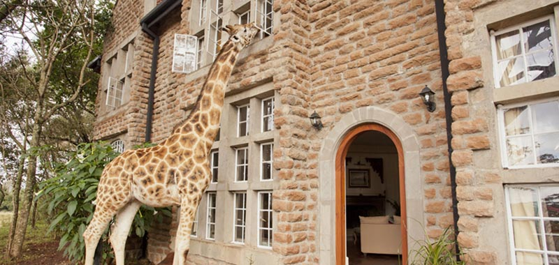 Giraffe manor house (13)