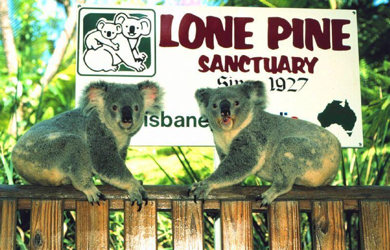 Lone Pine Sanctuary