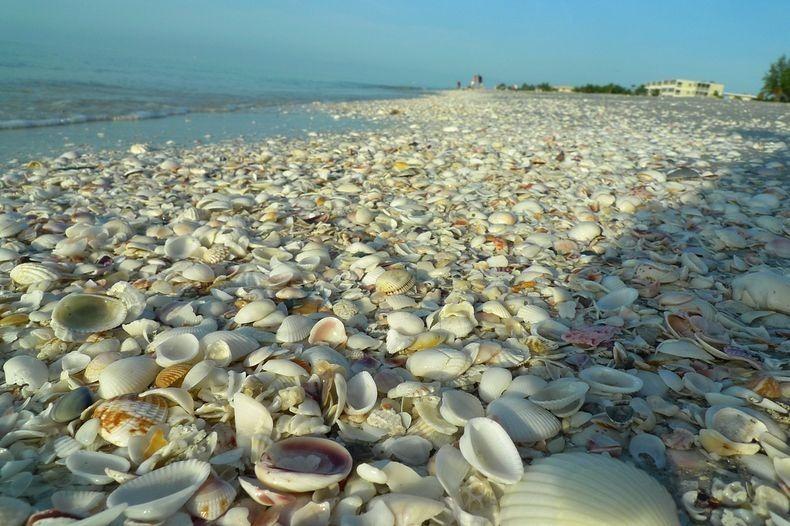 نتيجة بحث الصور عن شاطئ الأصداف بالسعودية